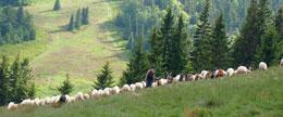 Soblówka – wieś pasterska w Beskidzie Żywieckim